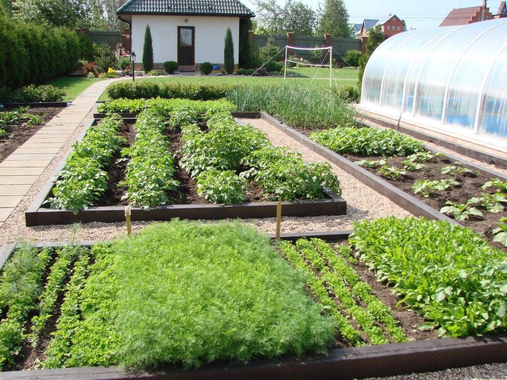 вольера прикрывают дизайн огорода фото с посадками овощей мочевыделительной системы